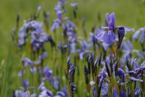 Skarby w Sieci Natura 2000 Pomorza Gdańskiego W 2015 roku Fundacja realizowała projekt polegający na  produkcji dwuodcinkowego cyklu filmów edukacyjnych prezentujących krajobrazy najbardziej specyficzne dla regionu i typowe dla nich siedliska przyrodnicze, chronione w ramach sieci Natura 2000.
